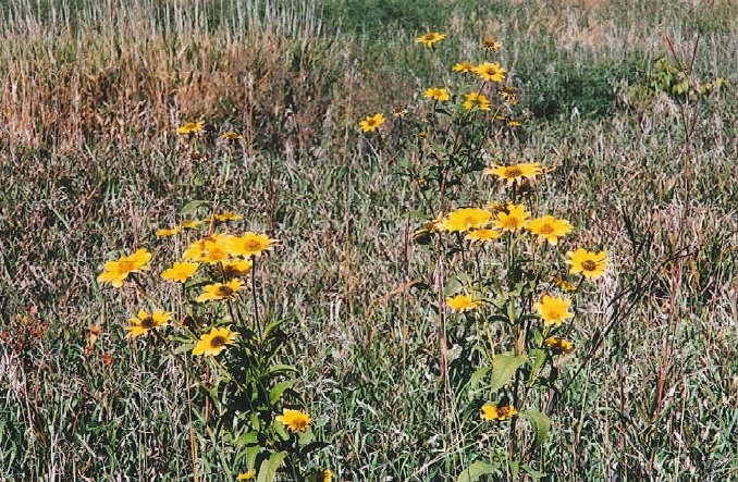 Wild Flowers - Conservation